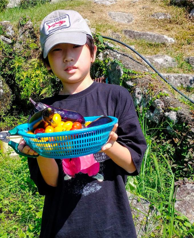 夏野菜の収穫の様子その2